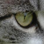 Was tun, wenn unterwegs der Katzenjammer kommt?