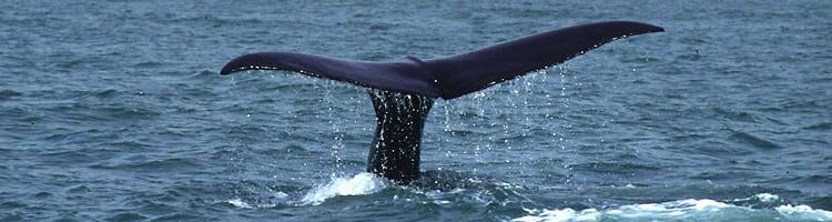 Kaikoura - Hot Spot für Whale Watching