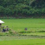 5 Gründe, um nach Bukittinggi zu fahren
