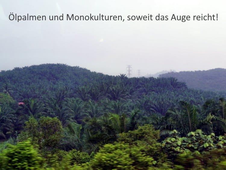 Palmöl statt Regenwald