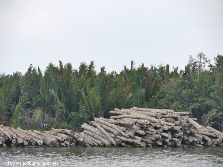 So sieht es heute aus, wo früher Regenwald war - Palmöl