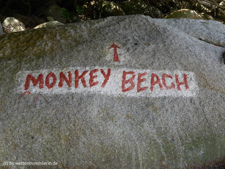 monkey_beach_05