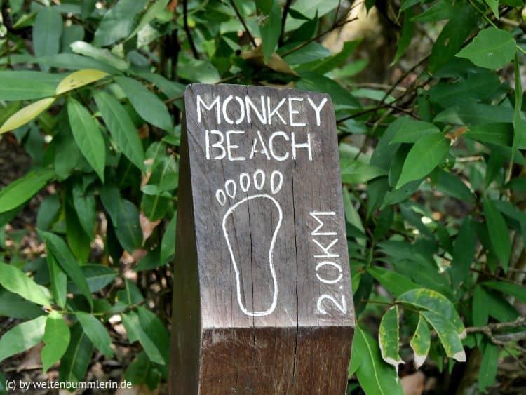 monkey_beach_11